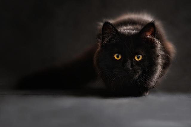 black-cat-3235x2157_41774