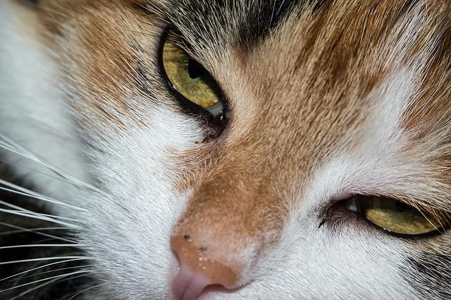 eyes-cat-5472x3648_32453