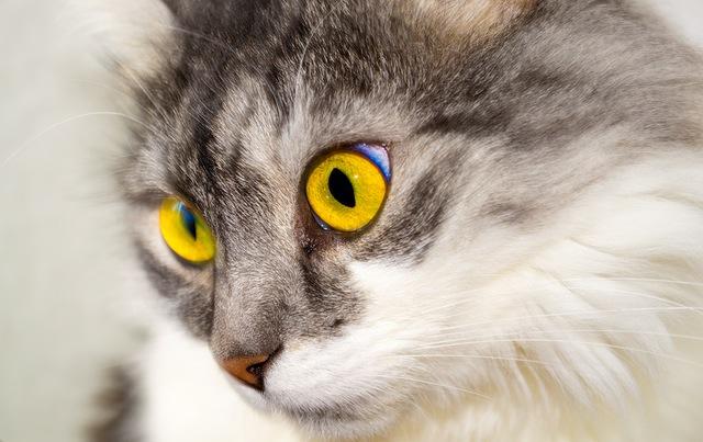 cat-eyes-face-cat-face-40994
