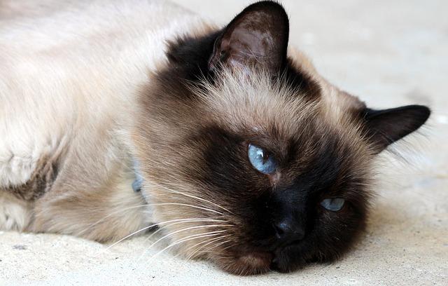 cat-1538636_640