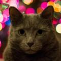 cat-animal-canon-christma-77455