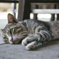 cat-kitten-kitty-feline-160667