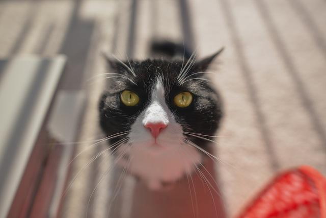 mood-pissed-cat-87196