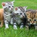 kittens-cat-cat-puppy-rush-45170
