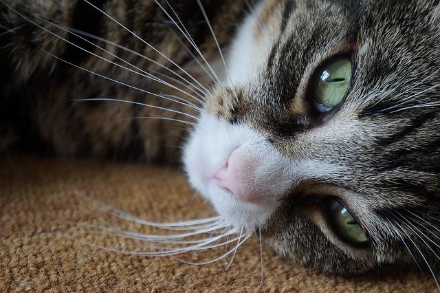 a-cute-cat-5456x3632_64951