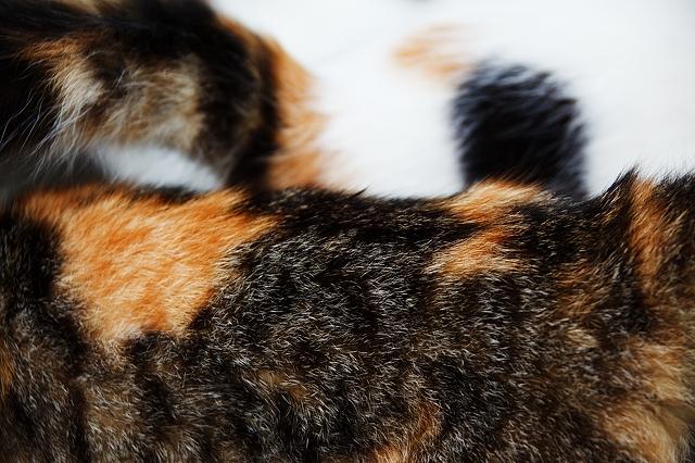 cat-fur-5000x3333_15978