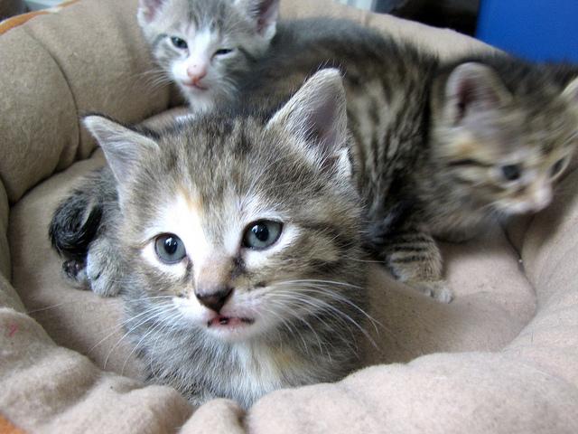 kitten07